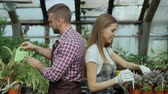 horticultura : Young cheerful woman in apron and gloves loosen ground in flower and chatting his boyfriend in greenhouse Stock Footage