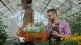 crescente : Young attractive florists couple in apron working in greenhouse. Cheerful woman walking with box of flowers and talks man loosen plant Vídeos