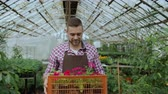 horticultura : Dolly shot of happy smiling man in apron holding box with flowers walking in his greenhouse Stock Footage