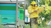 limpeza : Young beekeeper man clean wooden honey frame working in the apiary on summer day