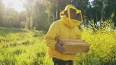 cera de abelha : Steadicam shot of beekeeper man with wooden frame walking in blossom field while working in apiary