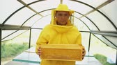 cera de abelha : Stedicam shot of beekeeper with wodden frames walking and inspecting beehives in apiary