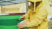 cera de abelha : Steadicam shot of beekeeper man clean wooden honey frame working in the apiary on summer day