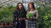 tablier : Cheerful female gardeners in aprons are talking and holding flowers while recording video for online blog about green plants using camera on tripod. Vidéos Libres De Droits