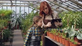 zahradník : Helpful child is counting pot plants in hothouse while her mother is entering data in tablet and talking to her daughter. Family business and agriculture concept. Dostupné videozáznamy