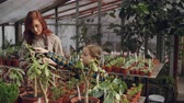zahradník : Adorable child is counting flowers in greenhouse while her mother is entering data in tablet and talking to her daughter. Family business and agriculture concept. Dostupné videozáznamy