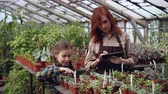 zahradník : Greenhouse owner and her cute daughter are counting pot plants in workplace and working with tablet touching screen entering numbers. Family business concept.