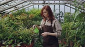 spacious : Hothouse worker wearing apron is watering plants and checking leaves while working inside greenhouse. Profession, growing flowers, workplace and people concept.