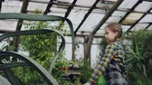 umidade : Concentrated little girl is washing leaves of large evergreen plant with spray bottle inside greenhouse. Family business, interesting hobby, flowers and people concept.
