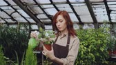 frasco pequeno : Young woman gardener wearing apron is watering pot plant and checking leaves while working inside greenhouse. Profession, growing flowers, workplace and people concept.