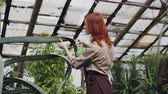 espaçoso : Attractive woman gardener in apron is washing leaves of large evergreen plant with sprayer inside greenhouse.Profession, interesting hobby, flowers and people concept.