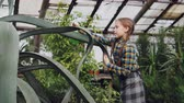 interesting : Focused child is sprinkling water on leaves of evergreen plant with sprayer inside greenhouse. Family business, interesting hobby, flowers and people concept. Stock Footage