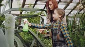 spacious : Young woman professional gardener is teaching her adorable little daughter to wash leaves of large evergreen plant with spray bottle inside greenhouse. Stock Footage