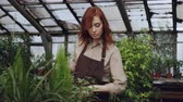 umidade : Pretty red-haired woman is spraying plants and checking seedlings inside spacious greenhouse. Profession, growing flowers, workplace and people concept.