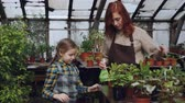 зелень : Young woman is washing plant leaves in orchard while her curious daughter is touching flowers. Child is interested in her mothers work, they are talking and smiling. Стоковые видеозаписи