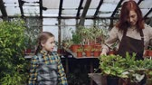 umidade : Adorable little girl is helping her mother to wash green plants with sprinkler while working together in orchard. Childhood, people and growing flowers concept. Stock Footage