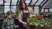 зелень : Young woman skilled gardener is teaching her curious little daughter to wash leaves of green pot plantst with spray bottle inside greenhouse. Family business concept. Стоковые видеозаписи