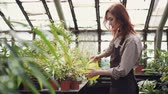 spacious : Attractive young woman in apron holding watering-pot and watering green plants in glasshouse. Growing flowers, small business and people concept. Stock Footage