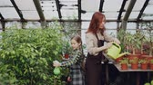 vegetação : Mother and daughter are working together in hothouse watering plants using spray-bottle and watering-pot. Family business, common hobby and gardening concept. Vídeos
