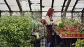 зелень : Female gardener is spraying flowers from watering pot while her helpful daughter is sprinkling with spray bottle. Family members are working together in greenhouse. Стоковые видеозаписи
