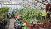 gartenbau : Little girl is spraying green pot plants using spray bottle while her mom is watering flowers with watering-pot. Growing flowers and organic vegetables concept.