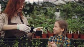zahradník : Attractive woman gardener and her cheerful daughter are choosing seedlings and putting them in plastic container while working in greenhouse together.