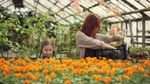 colocando : Attractive female florist and her cute daughter are putting pots with beautiful flowers inside plastic container and smelling flowers. People and gardening concept. Vídeos