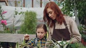 contar : Caring parent is telling her daughter about different plants while working in greenhouse together, curious child is looking at flowers and touching them. Stock Footage