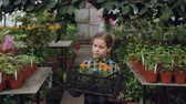 blooming : Adorable little girl is carrying container with pot flowers in greenhouse, looking around at beautiful blooming plants, smelling them and smiling. Stock Footage