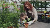hoe : Pretty female gardener in apron and her cute child are stirring soil in pot growing plant in greenhouse using gardening tools. Agriculture and family concept.