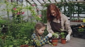 зелень : Young florist and her child are hoing soil in pot with green plants using gardening tools and having conversation. Family, growing flowers and parenting concept.