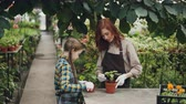 spades : Serious child is helping her mother in greenhouse stirring soil in pot caring for green plants and talking to her parent. Large hothouse with flowers is visible.