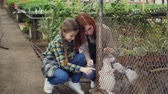 lebre : Pretty female farmer and her beautiful daughter in aprons are playing with rabbits in cage on farm. Domestic animals, cheerful people, life and farming concept. Vídeos