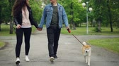 shiba : Slow motion low shot of loving dog owners walking in the park with beautiful small puppy enjoying walk and freedom. Path, green grass, shoes and clothes are visible. Stock Footage