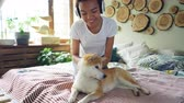 shiba : Joyful African American teenage girl is listening to music with headphones and fussing her calm shiba inu dog lying on bed and enjoying its owners love. Fun and animals concept. Stock Footage