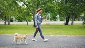 shiba : Slow motion of cheerful African American girl walking her pedigree dog in city park and using smartphone going along road with lawns and trees visible.