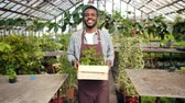 vestuário : Portrait of African American man florist carrying container with flowers in greenhouse walking through beautiful blooming plants looking at camera and smiling Vídeos
