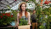 virágárus : Slow motion of smiling florist woman carrying box of flowers in greenhouse and looking around at blooming plants. People, agriculture and floristry concept.