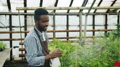 piccolo : Slow motion of handsome African American guy in apron watering green plants in greenhouse smiling enjoying work. Agriculture and young people concept.