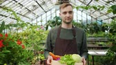 питание : Slow motion of young farmer in apron carrying box of fresh vegetables in greenhouse looking at camera then around at green plants. Nature and business concept.