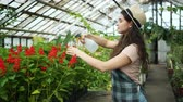 piccolo : Young woman in apron and hat is spraying water on plants in greenhouse using spray bottle enjoying work with nature. Florists, agriculture and job concept. Filmati Stock