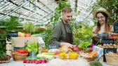 verkoopster : Happy couple of farmers is talking bringing organic food vegetables to greenhouse market discussing business. Farming, healthy lifestyle and shopping concept. Stockvideo