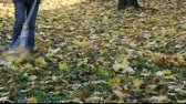 otthonos : Raking of leaves in autumn Stock mozgókép
