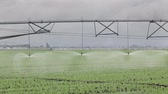 tube : Irrigation system for water supply in pea  field