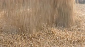 Wheat harvest, closeup of crop pouring, slow motion HD footage