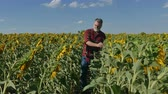 качество : Farmer or agronomist examining sunflower plant in field using tablet