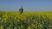 agronomist : Agronomist or farmer walking and examining blossoming canola field, rapeseed plant in spring
