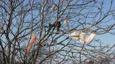 Pollution of nature, plastic shopping  bags at tree with blue sky in background, 4K footage