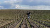 planta de maiz : Farmer or agronomist walking and  inspecting quality of corn plants in field
