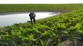 Farmer inspect young green sunflower plants in mud and water and speaking by mobile phone, damaged field after flood in spring